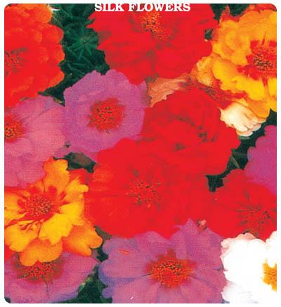 İpek Çiçeği (Şellaki)