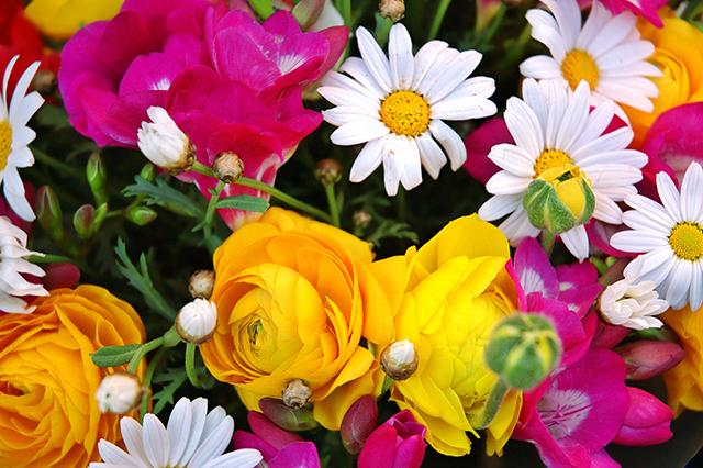 Hobi Grubu Çiçek Tohumları