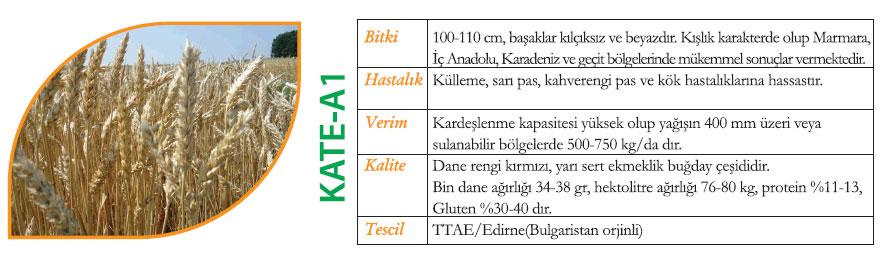 kate-a1