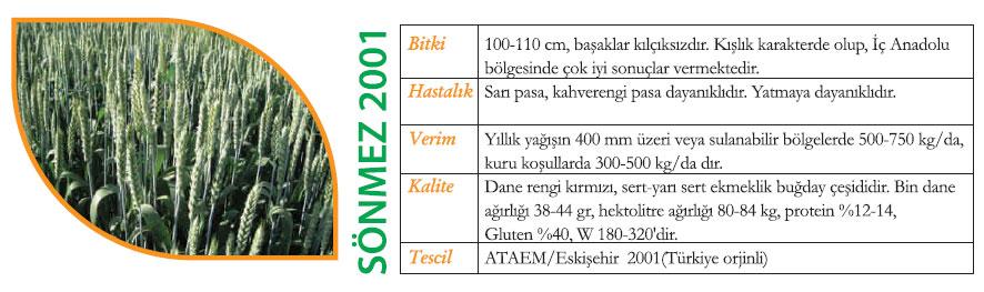 sönmez 2001