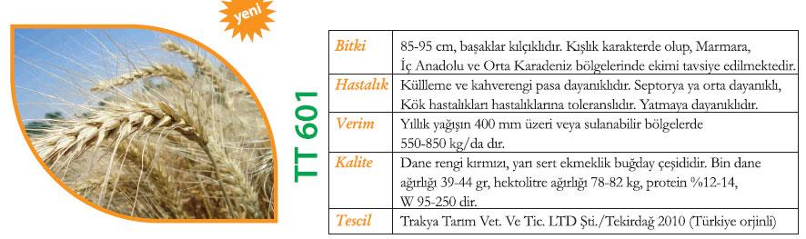 tt 601